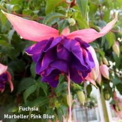 Fuchsia Marbeller Pink Blue