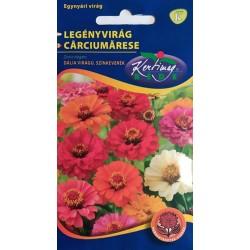 Carciumarese cu flori tip Dalia