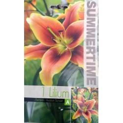 Bulbi de crini - Lilium...