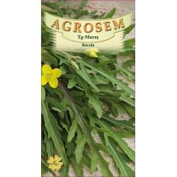 Rucola seminte - Eruca sativa