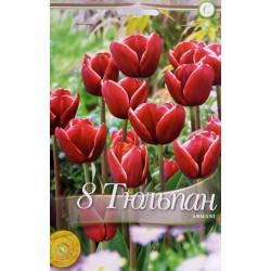 Tulipa Armani
