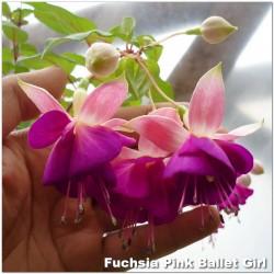 Fuchsia Pink Ballet Girl