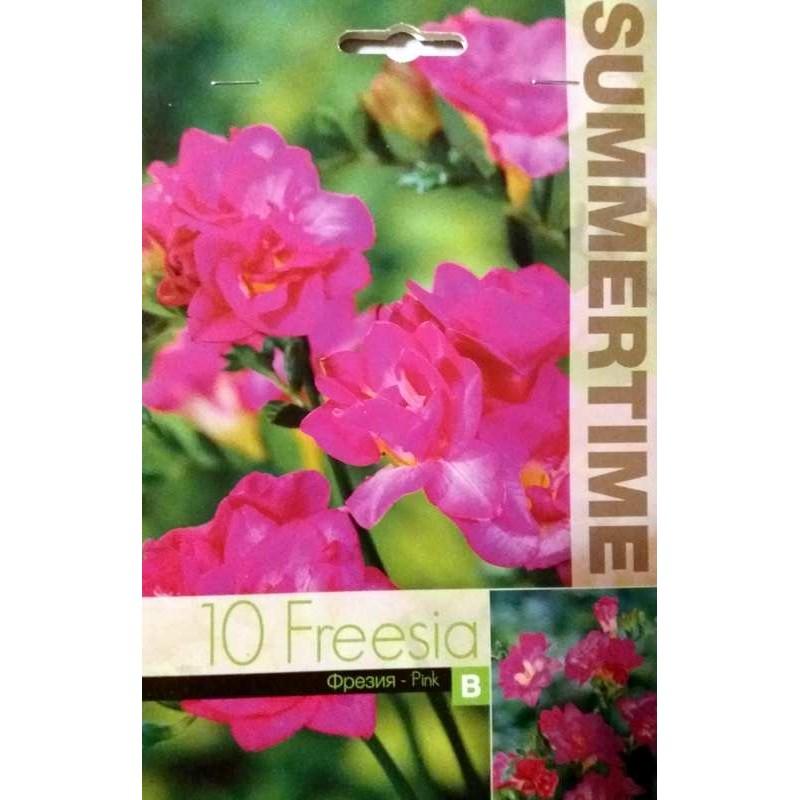 frezia roz