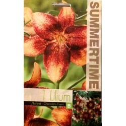 Lilium Broken Heart