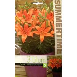 Lilium asiatic Fantasiatic Orange