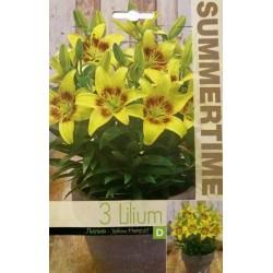 Lilium Fantasiatic Yellow