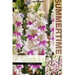 Gladiolus Kirov