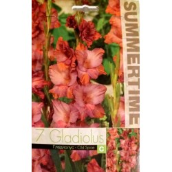 Gladiole Old Spice