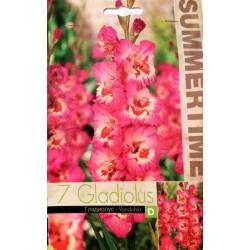 Gladiole Vandohla