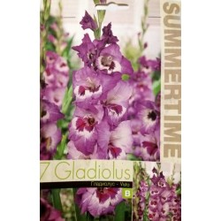 Gladiole Vista