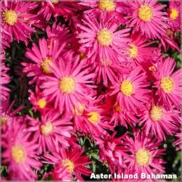 Aster Island Bahamas