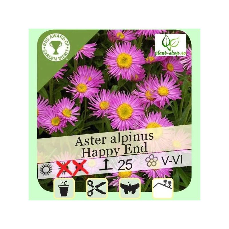 "Aster alpinus ""Happy End"""
