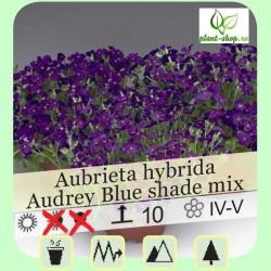 "Aubrieta hybrida ""Audrey F1 Blue Shades"""