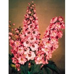 Delphinium x cultorum 'Pacific Giants Astolat'