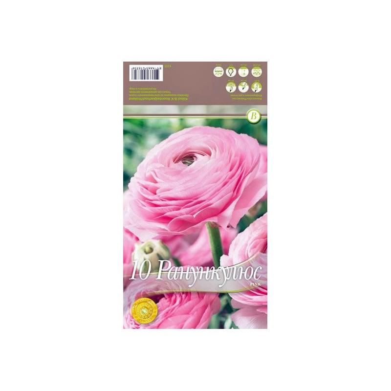 Ranunculus 'Pink'
