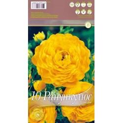 Ranunculus 'Yellow'