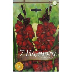 Gladiole bulbi