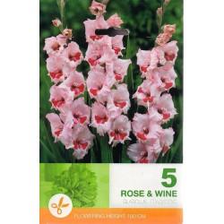 Gladiole bulbi Rose & Wine