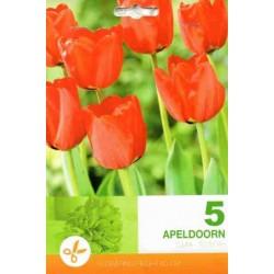 Tulip Apeldoorn