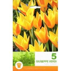 Tulipa Giuseppe Verdi