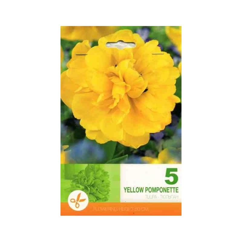 Tulipa Yellow Pomponette