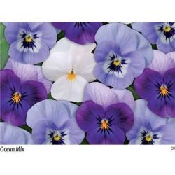 Seminte Viola cornuta Callisto F1 Ocean mix