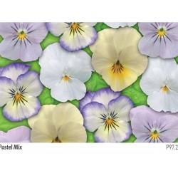 Seminte Viola cornuta Callisto F1 Pastel mix