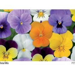 Seminte Viola cornuta Callisto F1 Total mix