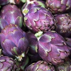 Seminte Cynara scolymus Violet de Provence