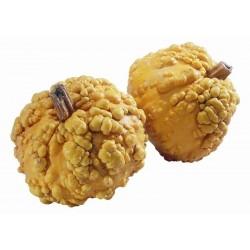Seminte Dovleac - Cucurbita Galeuse Orange