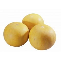 Seminte Dovleac - Cucurbita pepo Pomme D'or