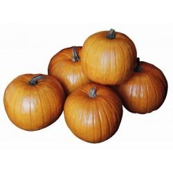 Seminte Dovleac de Halloween - Cucurbita pepo Aspen F1