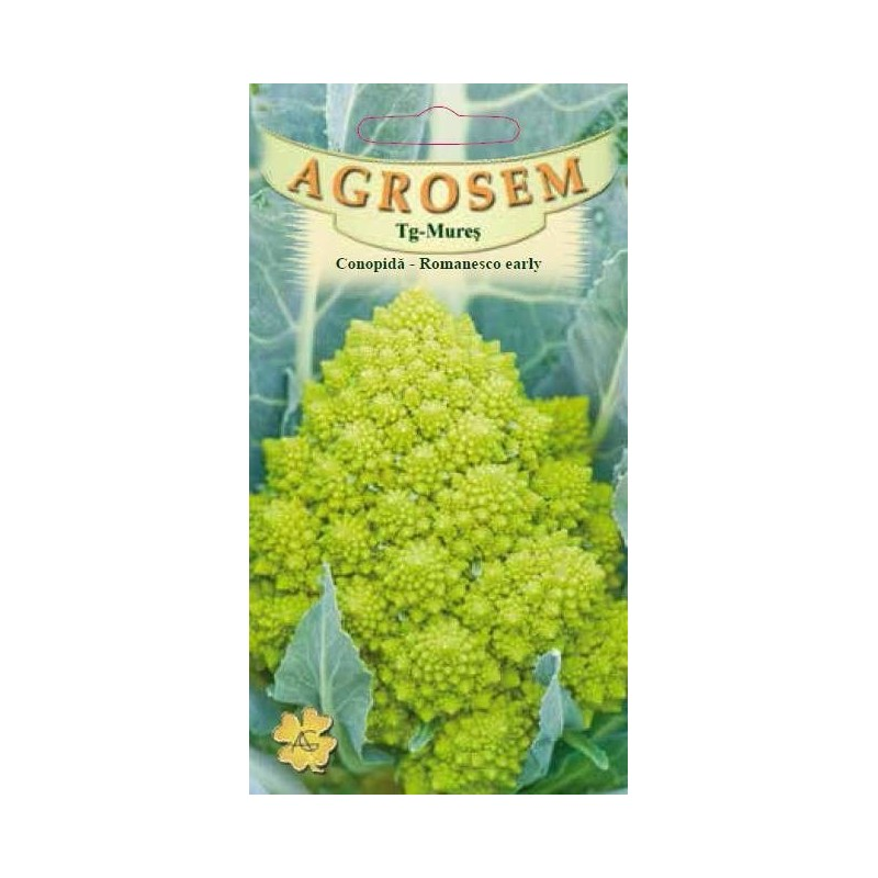 Conopida seminte - Brassica oleracea var. botrytis Romanesco Early
