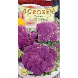 Conopida seminte - Brassica oleracea var. botrytis Sicily Purple