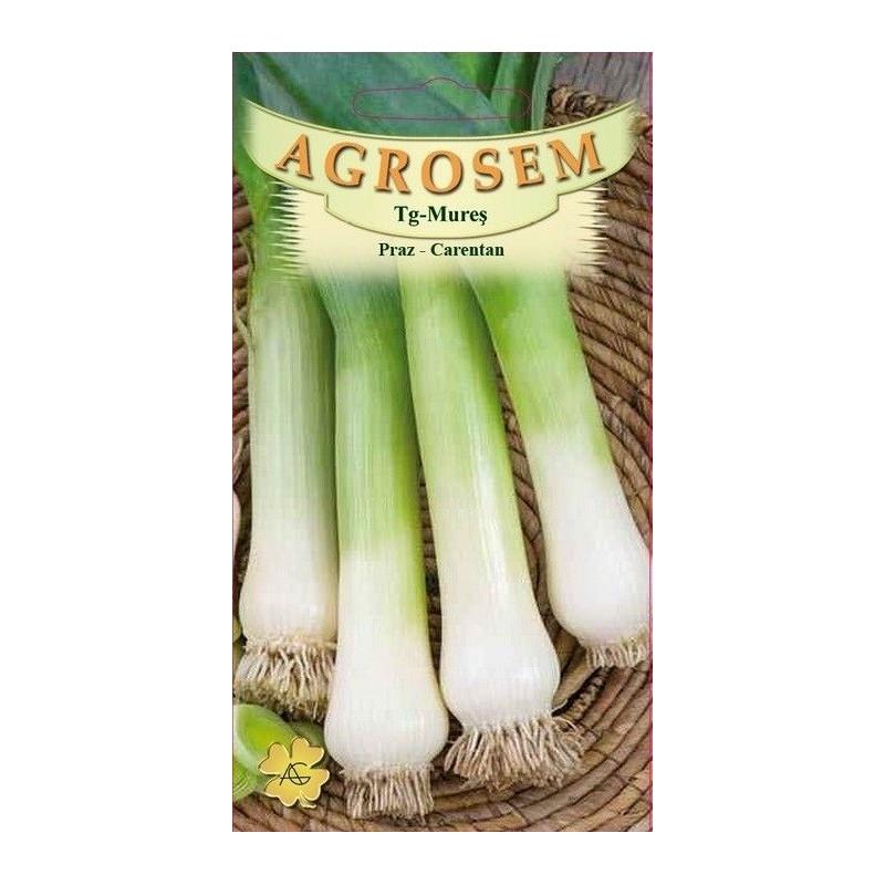 Praz seminte - Allium porrum Carentan