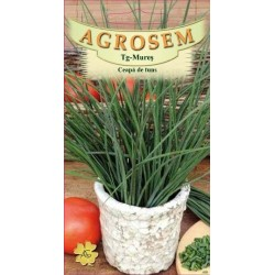 Ceapa de tuns seminte - Allium schoenoprasum