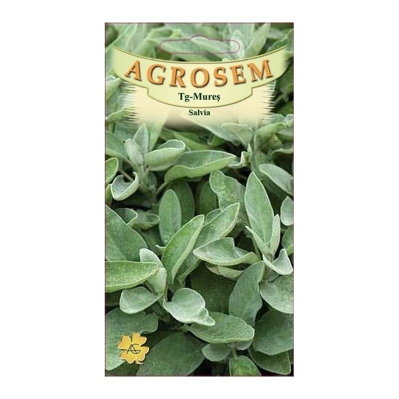 Salvia seminte - Salvia officinalis