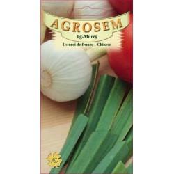 Usturoi de frunze seminte - Allium tuberosum