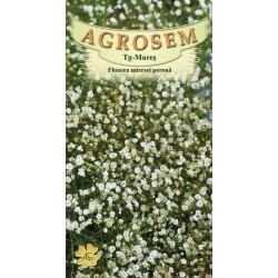 Floarea miresei perena alb seminte - Gypsophila paniculata