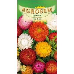 Flori de pai seminte - Helichrysum bracteatum mix