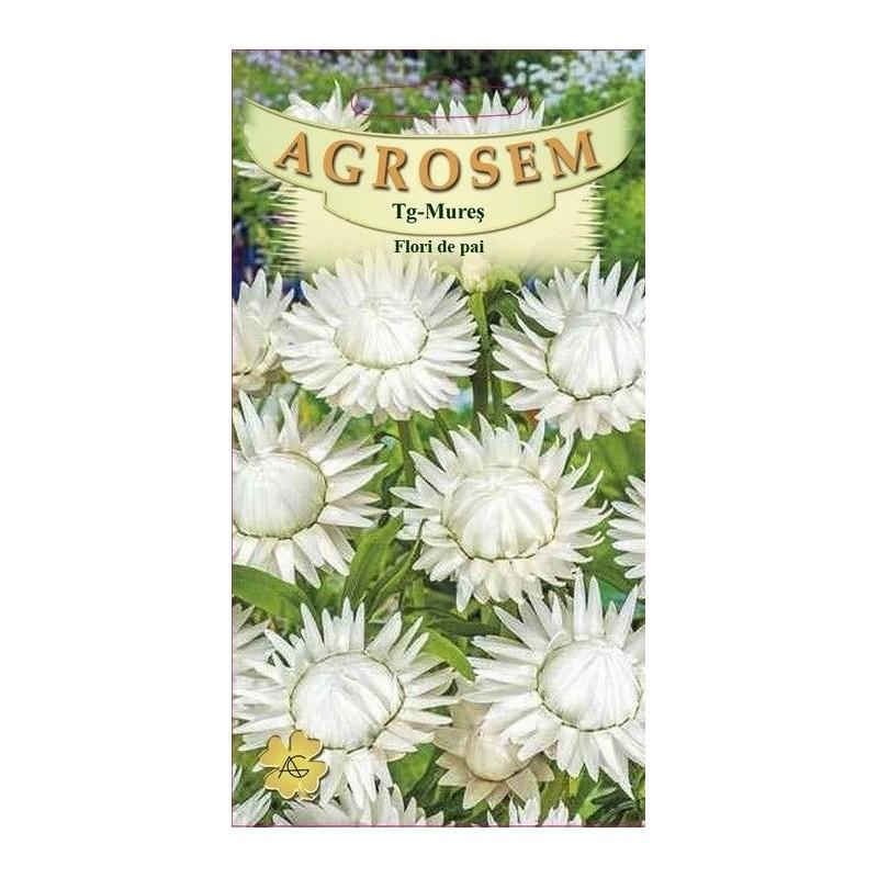 Flori de pai albe seminte - Helichrysum bracteatum