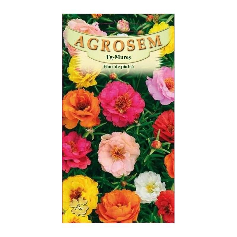 Flori de piatra seminte - Portulaca grandiflora