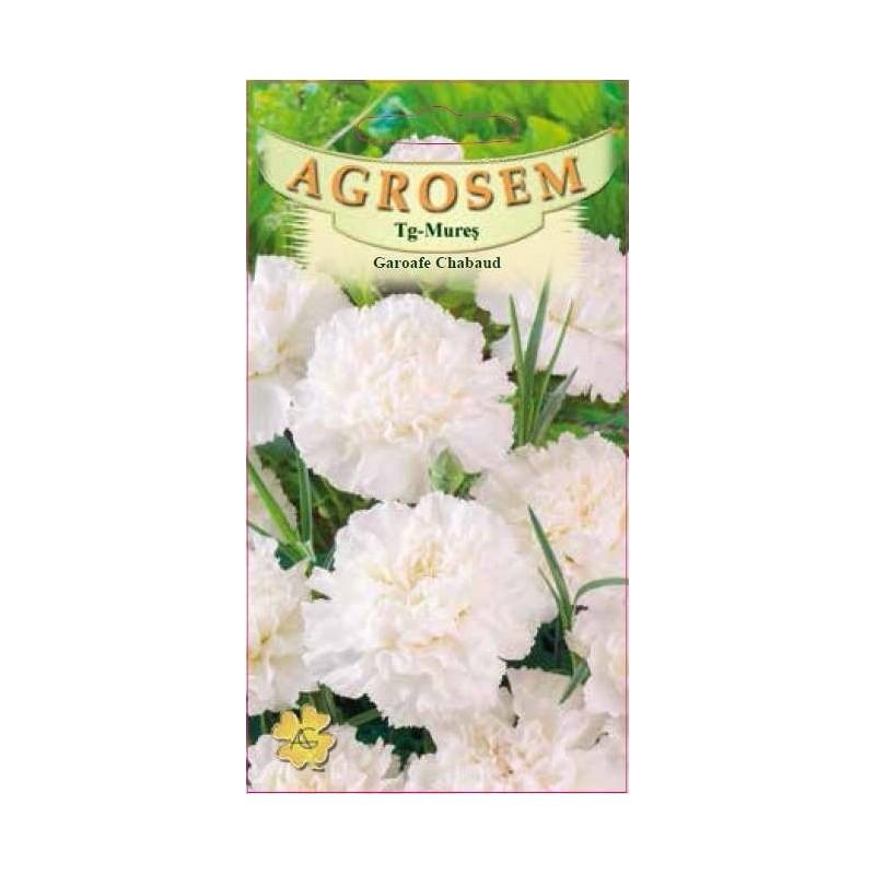 Garoafe Chabaud albe seminte - Dianthus caryophyllus Chabaud White