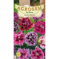 Garoafe chinezesti seminte - Dianthus chinensis mix
