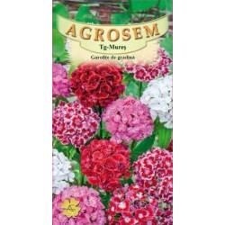 Garofite de gradina seminte - Dianthus barbatus mix