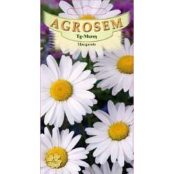 Margarete seminte - Chrysanthemum leucanthemum