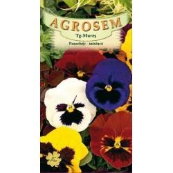 Panselute mix seminte - Viola witrockiana