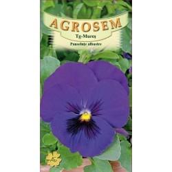 Panselute albastre seminte - Viola witrockiana