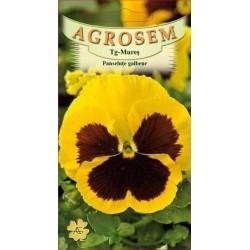 Panselute galbene seminte - Viola witrockiana