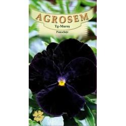Panselute negre seminte - Viola witrockiana